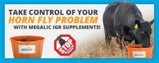 Take Control of your Horn Fly Problem