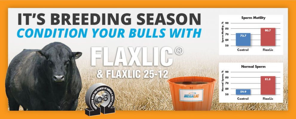 Breeding Season FlaxLic