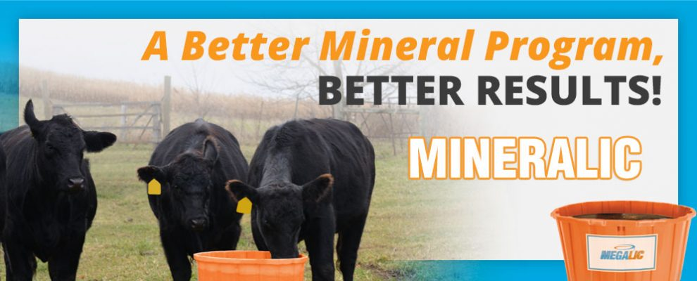 MineraLic Better Results MegaLic