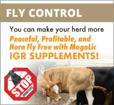 MegaLic Fly Control