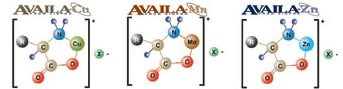 Availa Amino Acid Complexes