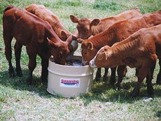Cattle, Calf, and Cow Supplements
