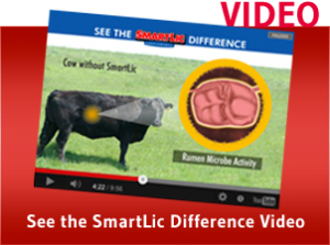 SmartLic Difference Video